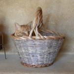 Info e Servizi: Cesto da relax su misura per gatti